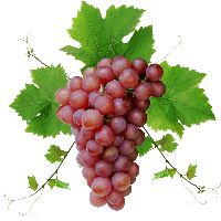 4-grape-png-image-download-picture-thumb.png